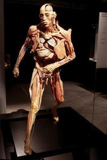 L'exposition ''Our body'' à Paris : leçon d'anatomie sur de vrais corps