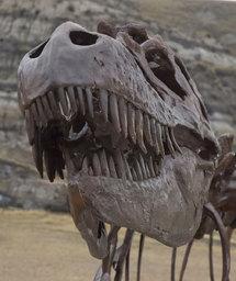 L'Albertosaurus, trouvé en Alberta (Canada). © Sue Sabrowski / Royal Tyrrell Museum
