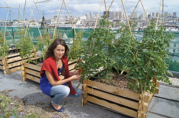 ils plantent des potagers sur les toits de paris