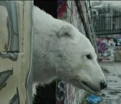 Un ours polaire meurt les rues de Londres : une vidéo choc de Greenpeace