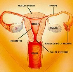 Un homme une femme comment c 39 est fait for L interieur du vagin