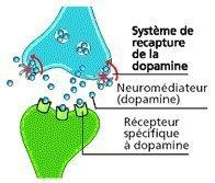 Addiction : comment le cerveau devient accro