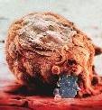La nidation : l'embryon s'accroche aux parois internes de l'utérus.