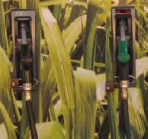 Au Brésil : canne à sucre pour l'éthanol