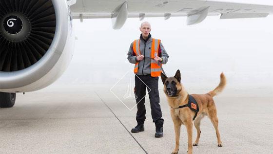 Equipe cynotechnique chargée de l'inspection des avions © Gwen Le Bras / Groupe ADP